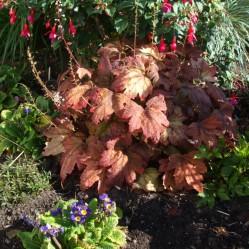 Garden plants 3