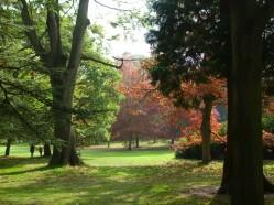 Autumn colours along the Long Walk 2