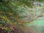 Autumnal grounds at Rufford Old Hall