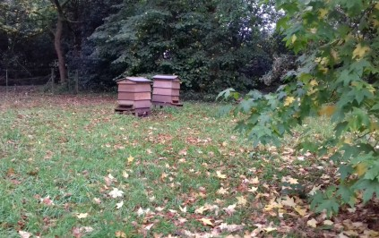 Bee hives at Rufford