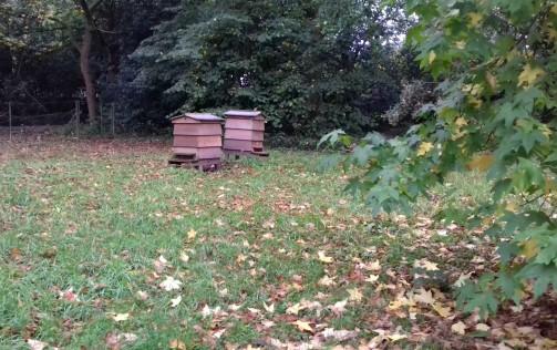 Bee hives at Rufford