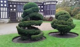 Topiary at Rufford Old Hall