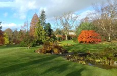 Harlow Carr 5