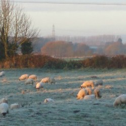 Frosty field giving a clear view of the ridge and furrow pattern