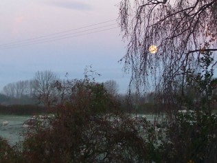 Morning view of frosty field with sheep Supermoon still showing at half past seven
