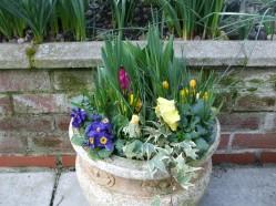 February flowers 1