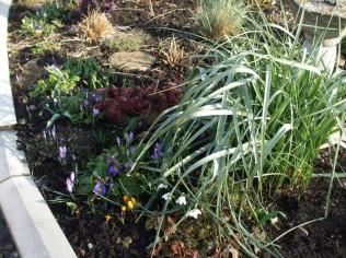 February garden 1