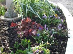 February garden 2