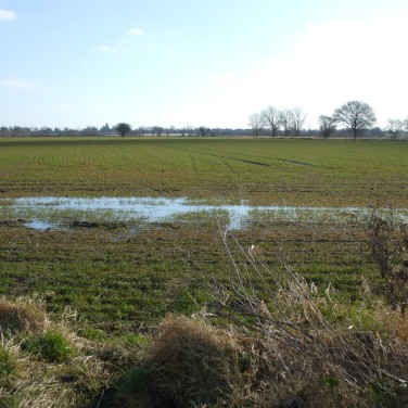 Muddy February Field