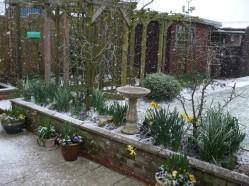 Snowy garden February 26