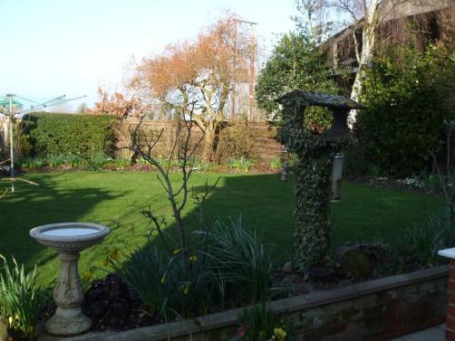 Sunny Garden February 25