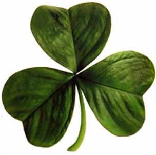 Shamrock : Saint Patrick, Ireland's patron saint, is said to have used it as a metaphor for the Christian Holy Trinity.