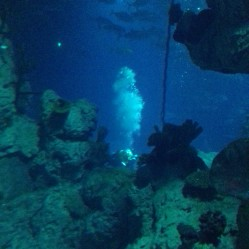 Diver in the main tank with feed