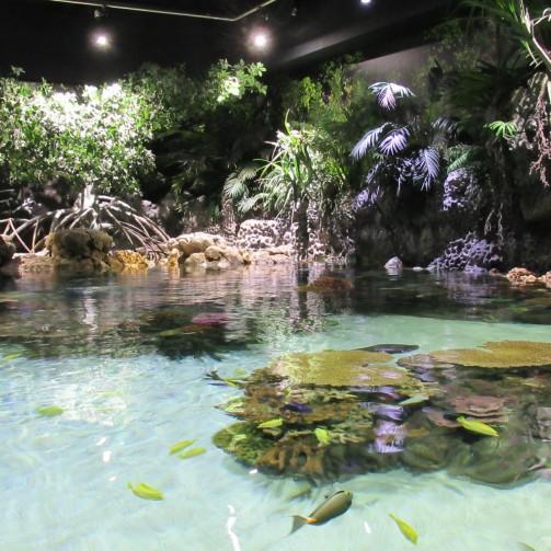 Lagoon tank 1