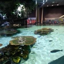 Lagoon Tank 5