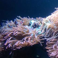 Life among the anemones