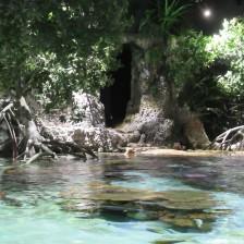 Mangrove swamp 5