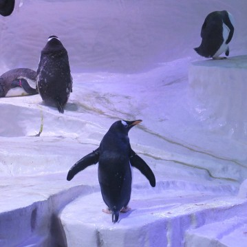 Penguins 1