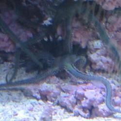 Starfish 2+