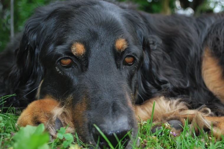dog-face-2687664_1920