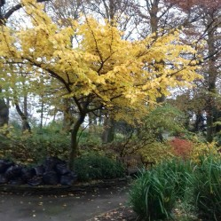 Autumn trees in Hesketh Park 2