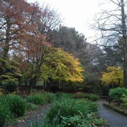 Autumn trees in Hesketh Park